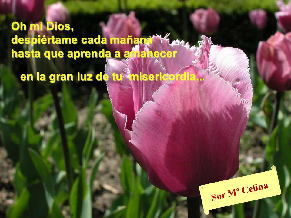 www.vitanoblepowerpoints.net Bendita seas María, Madre nuestra, Tú que me acompañas y me llevas junto a tu Hijo para que mi corazón pueda alabarte en todo momento.