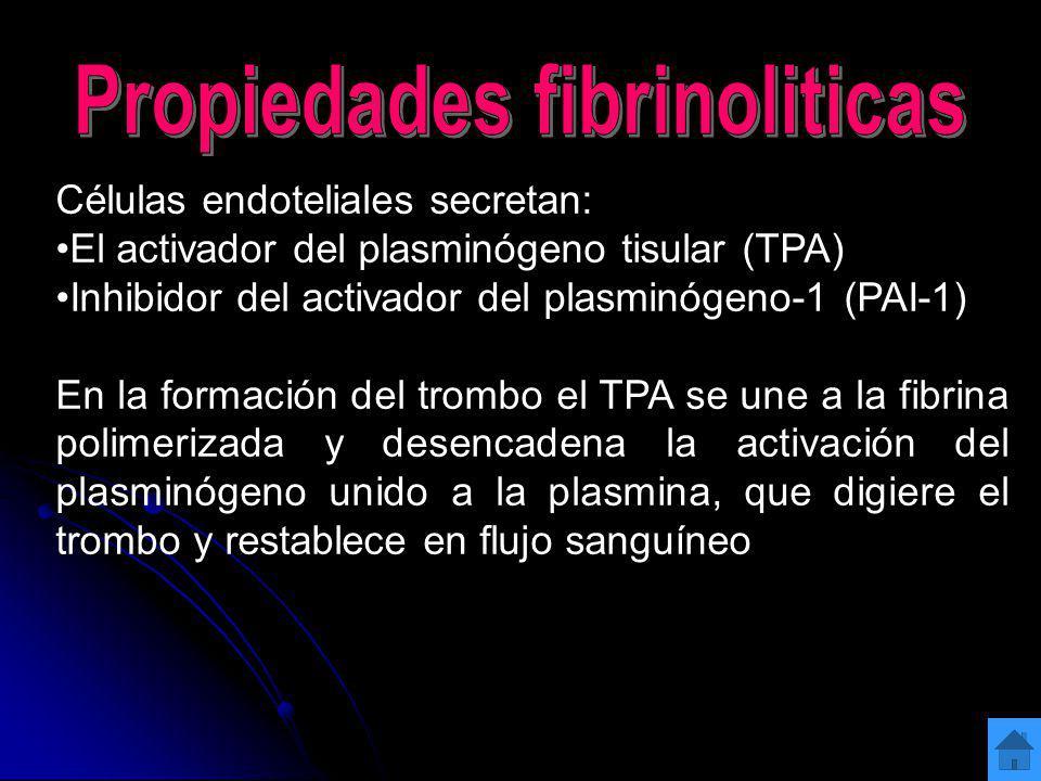 Células endoteliales secretan: El activador del plasminógeno tisular (TPA) Inhibidor del activador del plasminógeno-1 (PAI-1) En la formación del trom