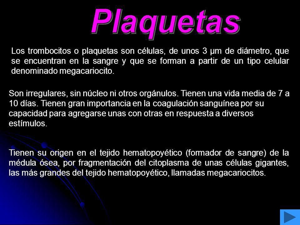 Los trombocitos o plaquetas son células, de unos 3 μm de diámetro, que se encuentran en la sangre y que se forman a partir de un tipo celular denomina