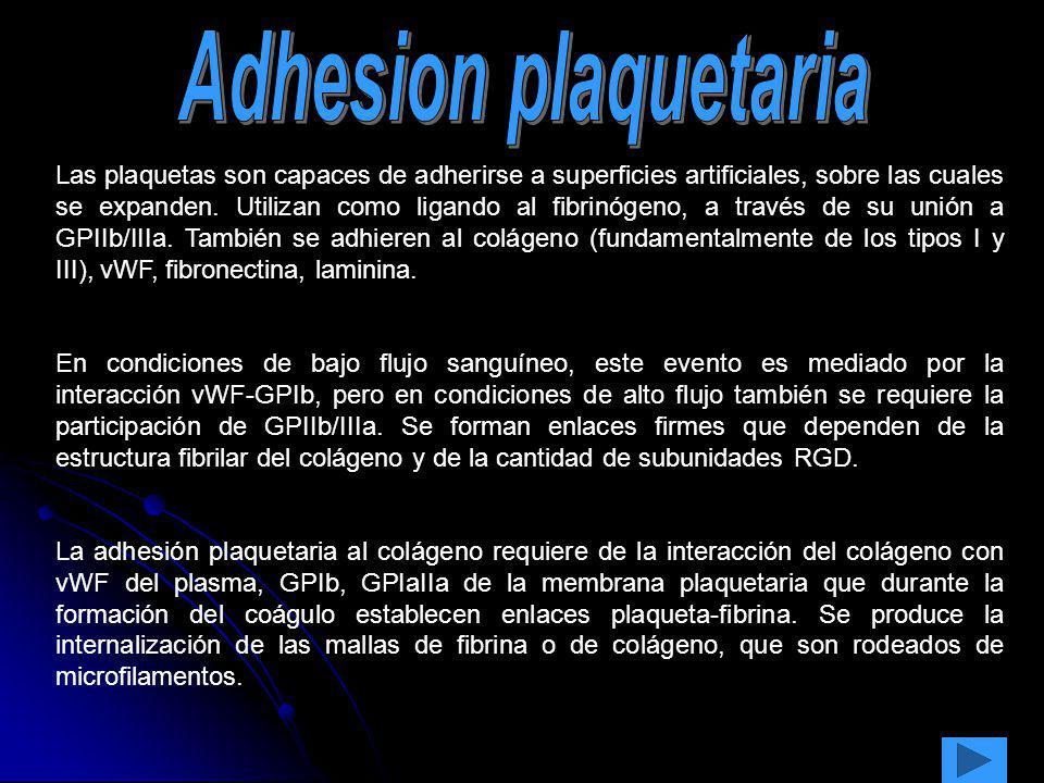 Las plaquetas son capaces de adherirse a superficies artificiales, sobre las cuales se expanden. Utilizan como ligando al fibrinógeno, a través de su