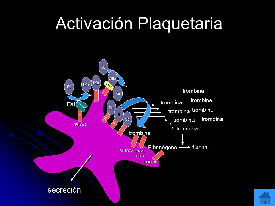 trombina FXI R R GPIb/V/IX secreción IX IXa VIIIa Xa X IXa R FPE Xa II Va trombina trombina trombina trombina trombina trombina trombina trombina Fibr