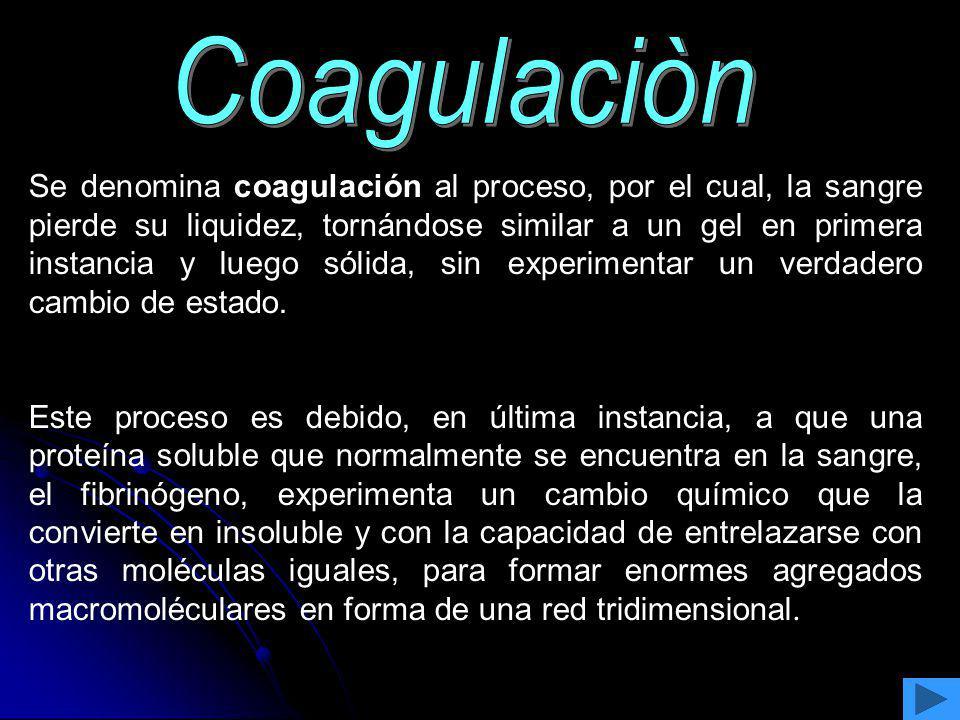 Se denomina coagulación al proceso, por el cual, la sangre pierde su liquidez, tornándose similar a un gel en primera instancia y luego sólida, sin ex