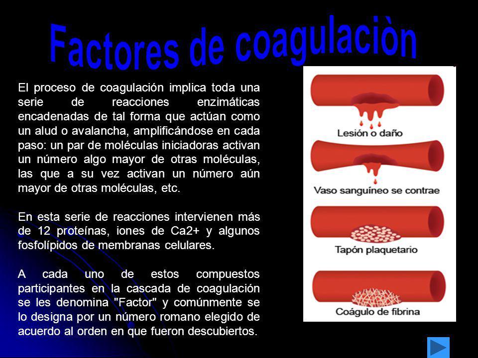 El proceso de coagulación implica toda una serie de reacciones enzimáticas encadenadas de tal forma que actúan como un alud o avalancha, amplificándos