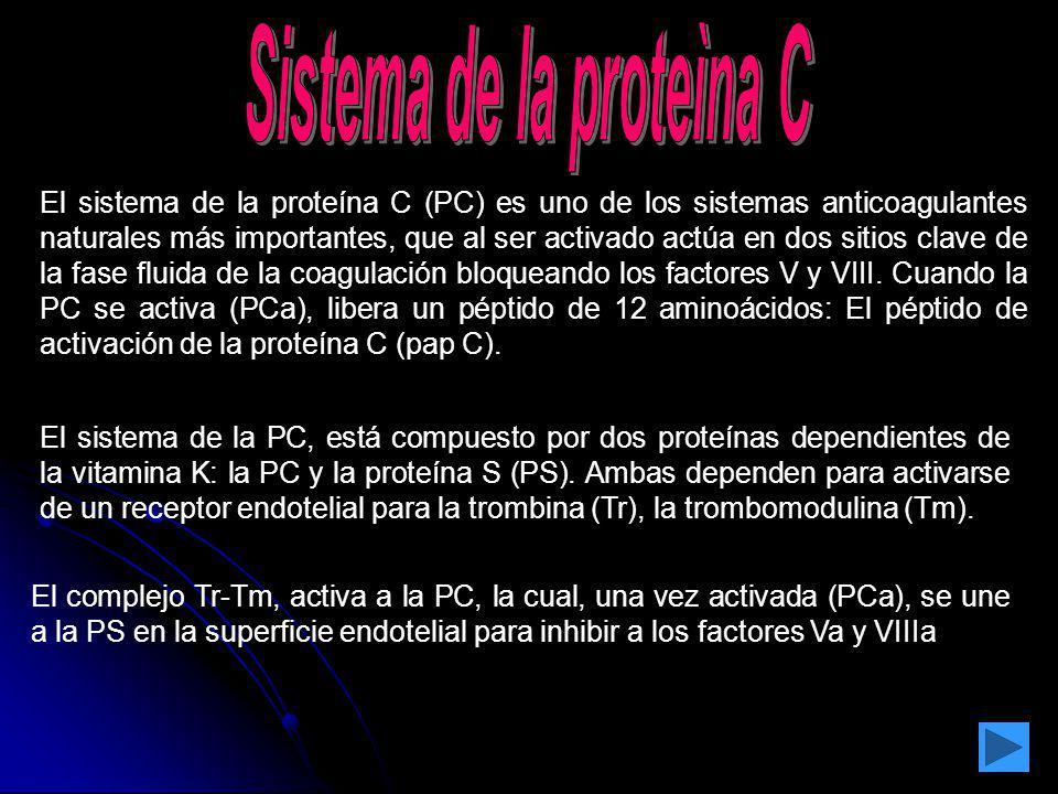 El sistema de la proteína C (PC) es uno de los sistemas anticoagulantes naturales más importantes, que al ser activado actúa en dos sitios clave de la