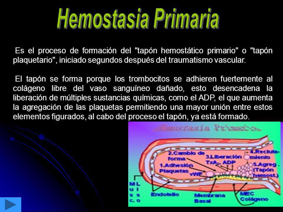 trombina FXI R R GPIb/V/IX secreción IX IXa VIIIa Xa X IXa R FPE Xa II Va trombina trombina trombina trombina trombina trombina trombina trombina Fibrinógeno fibrina GPIb/V/IX PAR1,PAR4 GPIIb/IIIa VWF Activación Plaquetaria