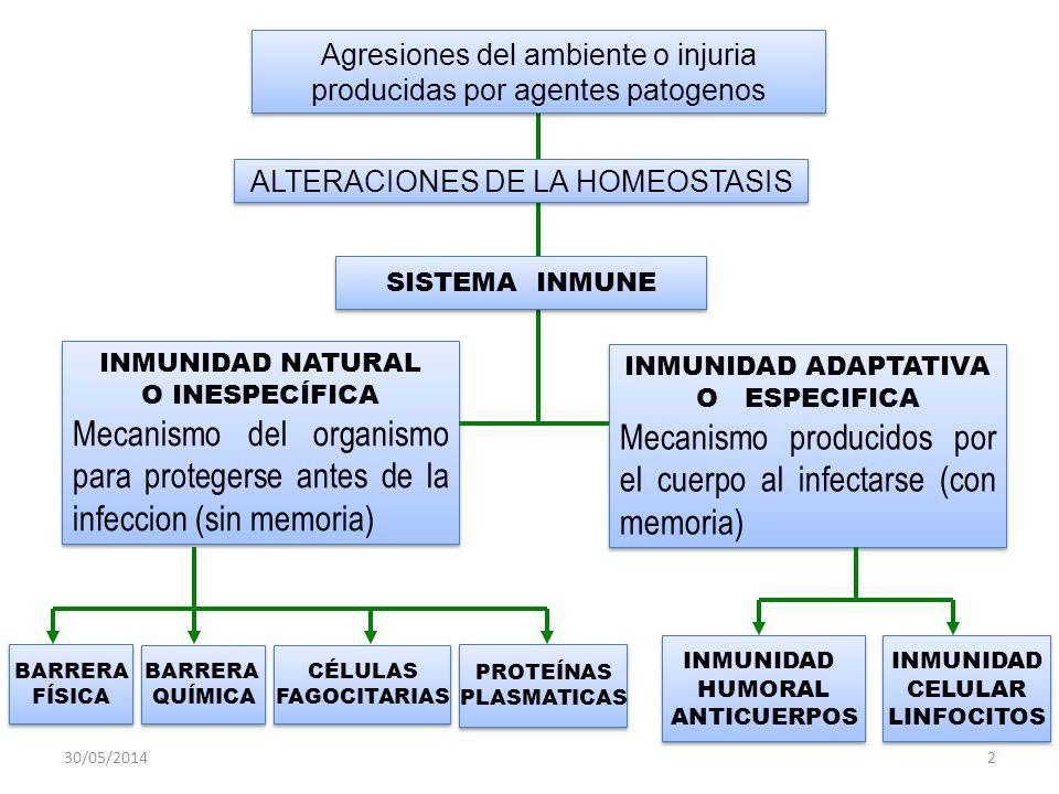 30/05/20142 BARRERA QUÍMICA BARRERA QUÍMICA BARRERA FÍSICA BARRERA FÍSICA INMUNIDAD HUMORAL ANTICUERPOS INMUNIDAD HUMORAL ANTICUERPOS PROTEÍNAS PLASMATICAS PROTEÍNAS PLASMATICAS CÉLULAS FAGOCITARIAS CÉLULAS FAGOCITARIAS INMUNIDAD CELULAR LINFOCITOS INMUNIDAD CELULAR LINFOCITOS INMUNIDAD NATURAL O INESPECÍFICA Mecanismo del organismo para protegerse antes de la infeccion (sin memoria) INMUNIDAD NATURAL O INESPECÍFICA Mecanismo del organismo para protegerse antes de la infeccion (sin memoria) INMUNIDAD ADAPTATIVA O ESPECIFICA Mecanismo producidos por el cuerpo al infectarse (con memoria) INMUNIDAD ADAPTATIVA O ESPECIFICA Mecanismo producidos por el cuerpo al infectarse (con memoria) ALTERACIONES DE LA HOMEOSTASIS SISTEMA INMUNE Agresiones del ambiente o injuria producidas por agentes patogenos