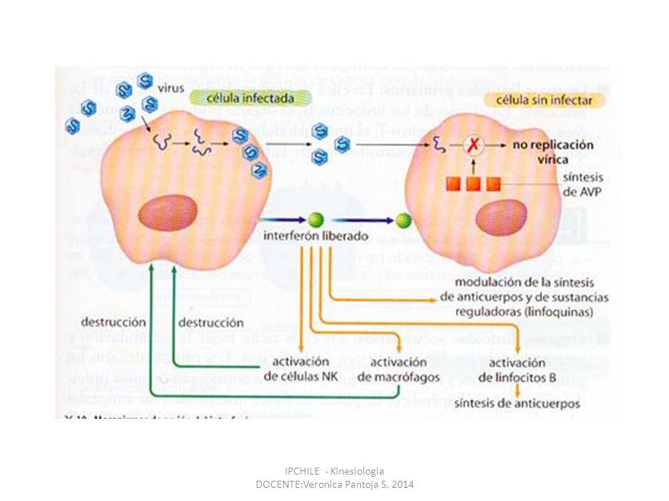 30/05/201417 IgM IgG IgA IgD IgE 1er anticuerpo en la sangre en la reacción inmune.