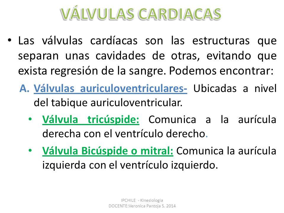 Las válvulas cardíacas son las estructuras que separan unas cavidades de otras, evitando que exista regresión de la sangre.