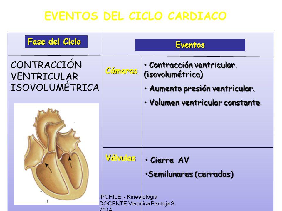 EVENTOS DEL CICLO CARDIACO Fase del Ciclo Eventos Cámaras Válvulas Contracción ventricular.