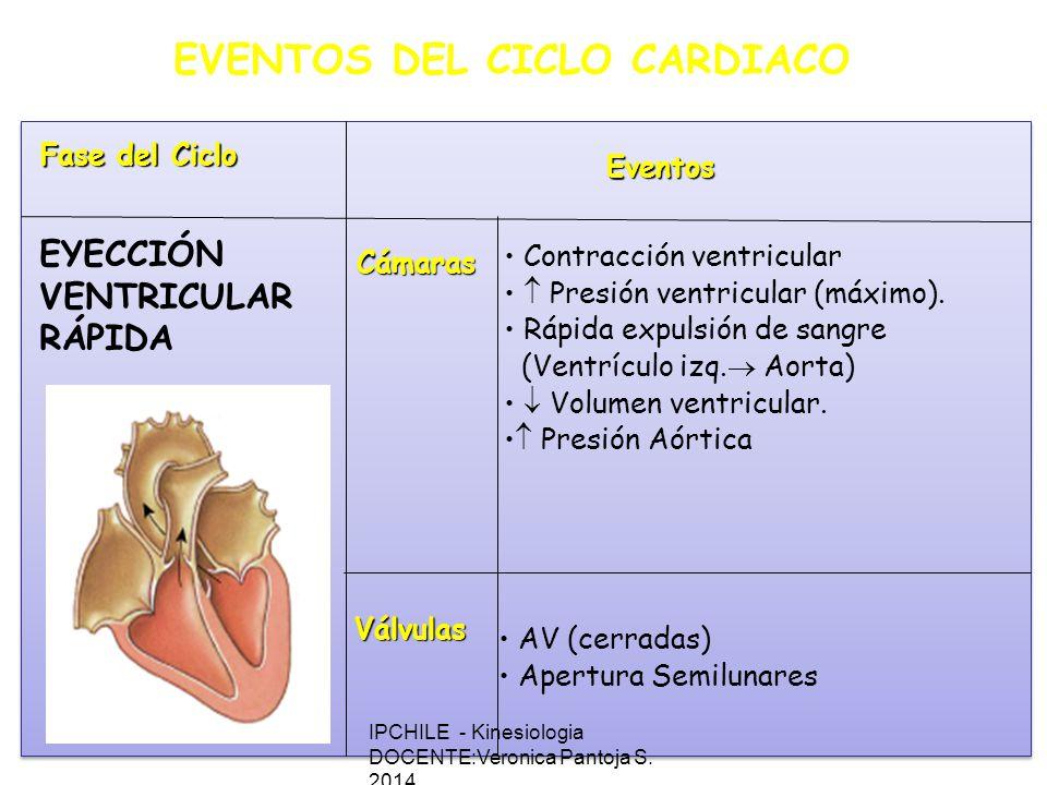 EVENTOS DEL CICLO CARDIACO Fase del Ciclo Eventos Cámaras Válvulas Contracción ventricular Presión ventricular (máximo).