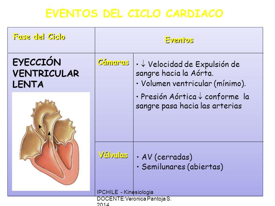 EVENTOS DEL CICLO CARDIACO Fase del Ciclo Eventos Cámaras Válvulas Velocidad de Expulsión de sangre hacia la Aórta.