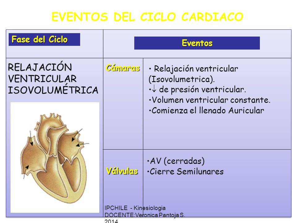 EVENTOS DEL CICLO CARDIACO Fase del Ciclo Eventos Cámaras Válvulas Relajación ventricular (Isovolumetrica).