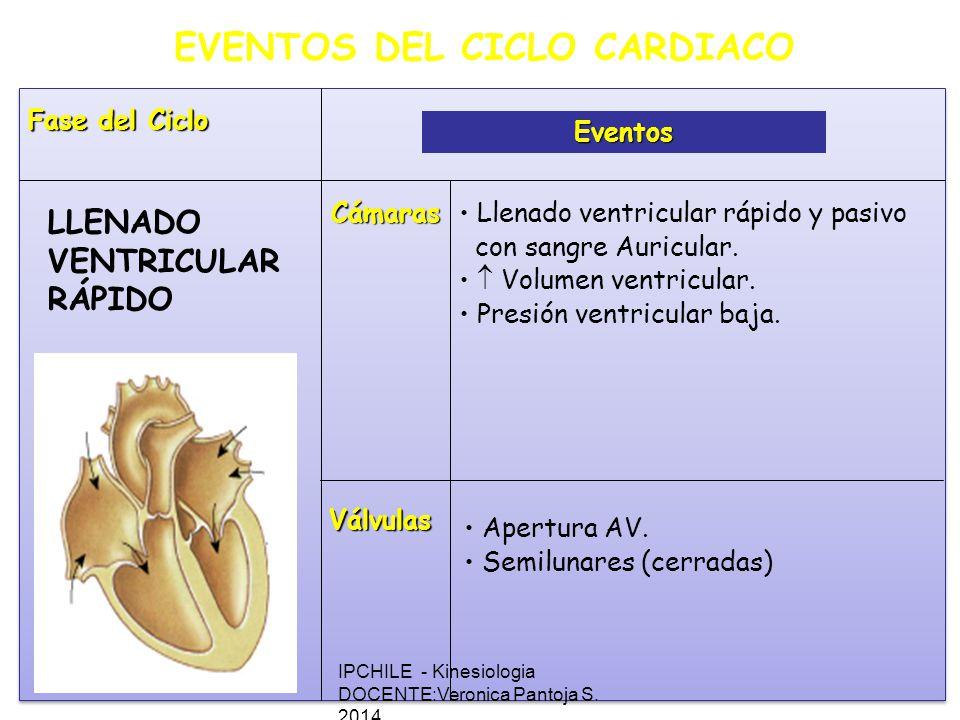 EVENTOS DEL CICLO CARDIACO Fase del Ciclo Eventos Cámaras Válvulas Llenado ventricular rápido y pasivo con sangre Auricular.