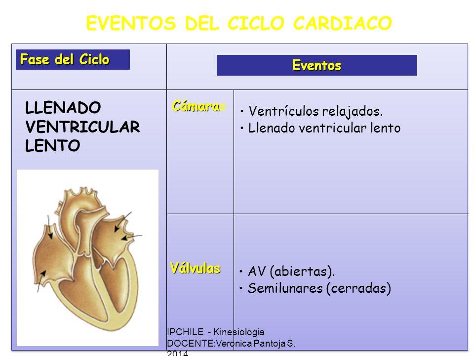 EVENTOS DEL CICLO CARDIACO Fase del Ciclo Eventos Cámara Cámaras Válvulas Ventrículos relajados.