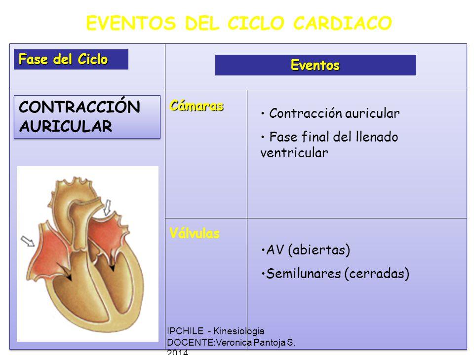 EVENTOS DEL CICLO CARDIACO Fase del Ciclo Eventos Cámaras Válvulas Contracción auricular Fase final del llenado ventricular AV (abiertas) Semilunares (cerradas) CONTRACCIÓN AURICULAR IPCHILE - Kinesiologia DOCENTE:Veronica Pantoja S.