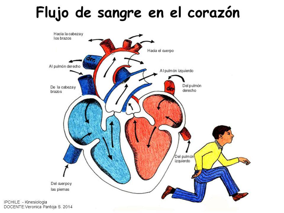 Flujo de sangre en el corazón IPCHILE - Kinesiologia DOCENTE:Veronica Pantoja S. 2014