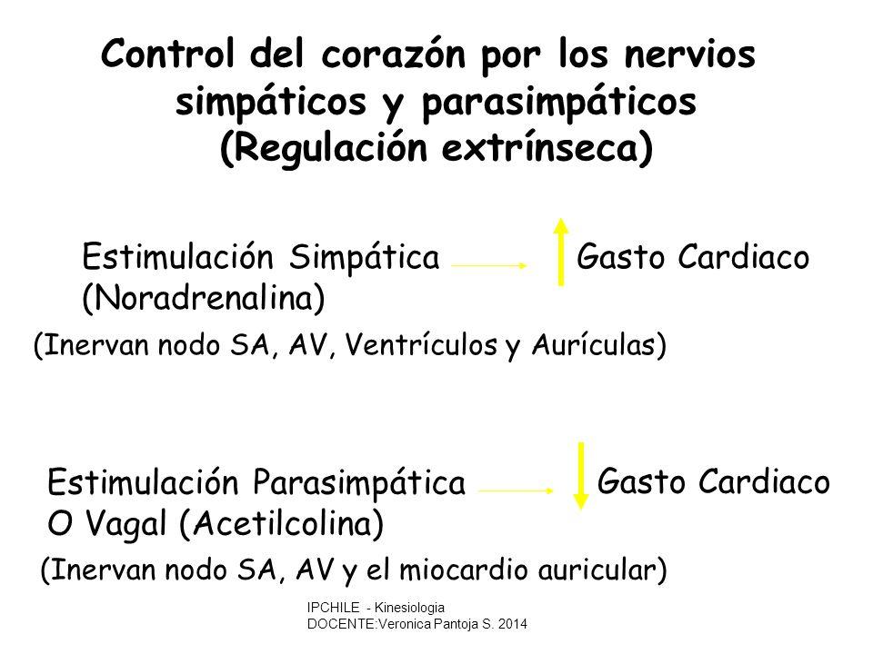 Control del corazón por los nervios simpáticos y parasimpáticos (Regulación extrínseca) Estimulación Parasimpática O Vagal (Acetilcolina) Gasto Cardiaco (Inervan nodo SA, AV y el miocardio auricular) Estimulación Simpática (Noradrenalina) Gasto Cardiaco (Inervan nodo SA, AV, Ventrículos y Aurículas) IPCHILE - Kinesiologia DOCENTE:Veronica Pantoja S.