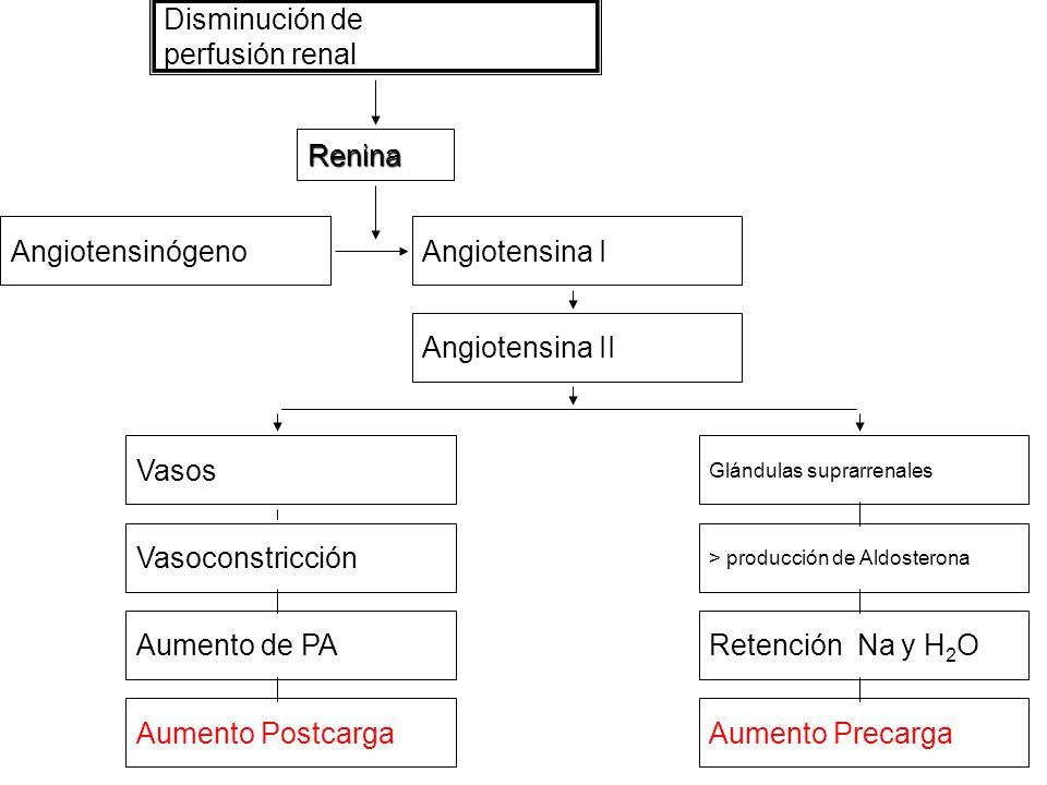 Disminución de perfusión renal Renina AngiotensinógenoAngiotensina I Angiotensina II Glándulas suprarrenales > producción de Aldosterona Vasos Vasoconstricción Retención Na y H 2 OAumento de PA Aumento PrecargaAumento Postcarga