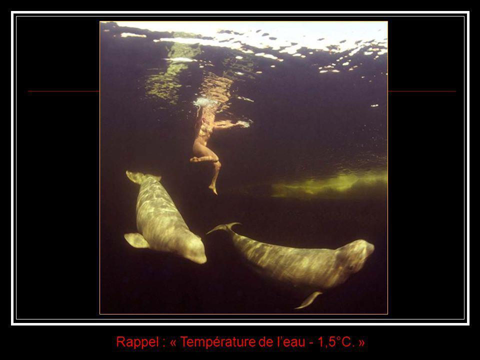 Nue au milieu de baleines blanches dans les eaux glaciales du cercle arctique. Autant de qualités sont nécessaires pour réaliser l'exploit de plonger