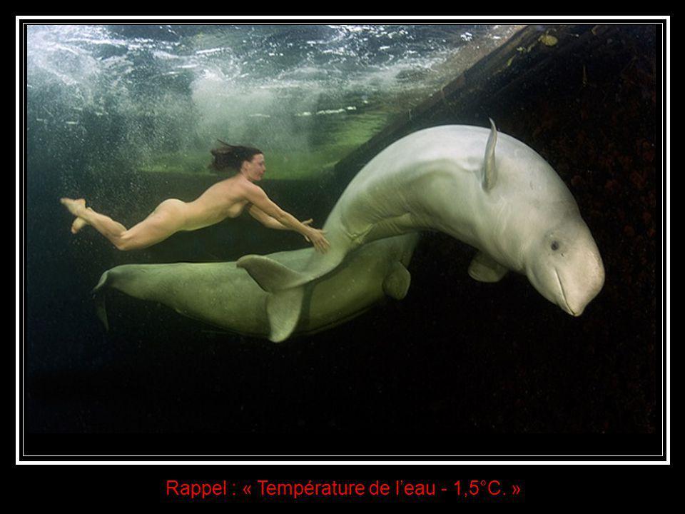 Un ballet aquatique fantasmagorique. Au-delà de l'aspect scientifique de cette expérience, les images recueillies sont de toute beauté. Voir Natalia,
