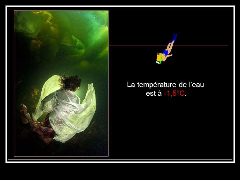 Un ballet aquatique fantasmagorique.