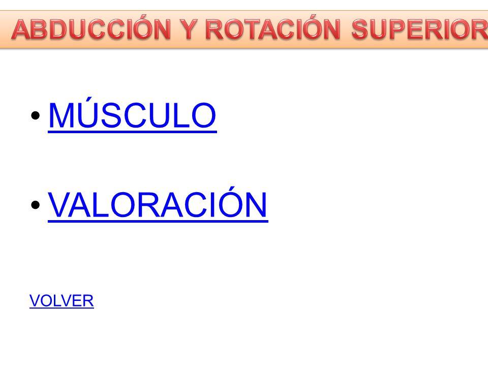 SERRATO MAYOR Costillas 1-8, fascia intercostal y aponeurosis de los intercostales Borde vertebral de la escápula.