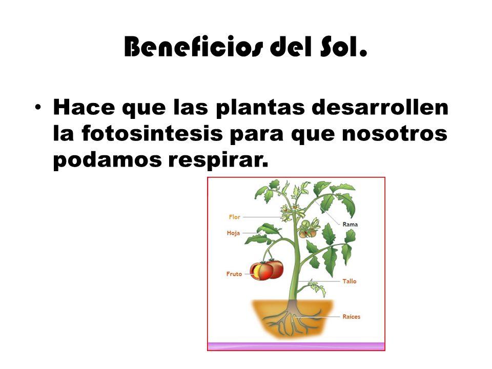 Beneficios del Sol. Hace que las plantas desarrollen la fotosintesis para que nosotros podamos respirar.