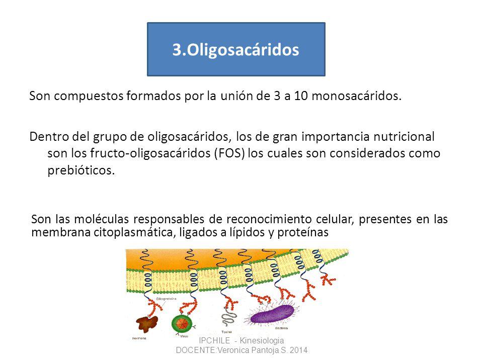 Son compuestos formados por la unión de 3 a 10 monosacáridos. Dentro del grupo de oligosacáridos, los de gran importancia nutricional son los fructo-o