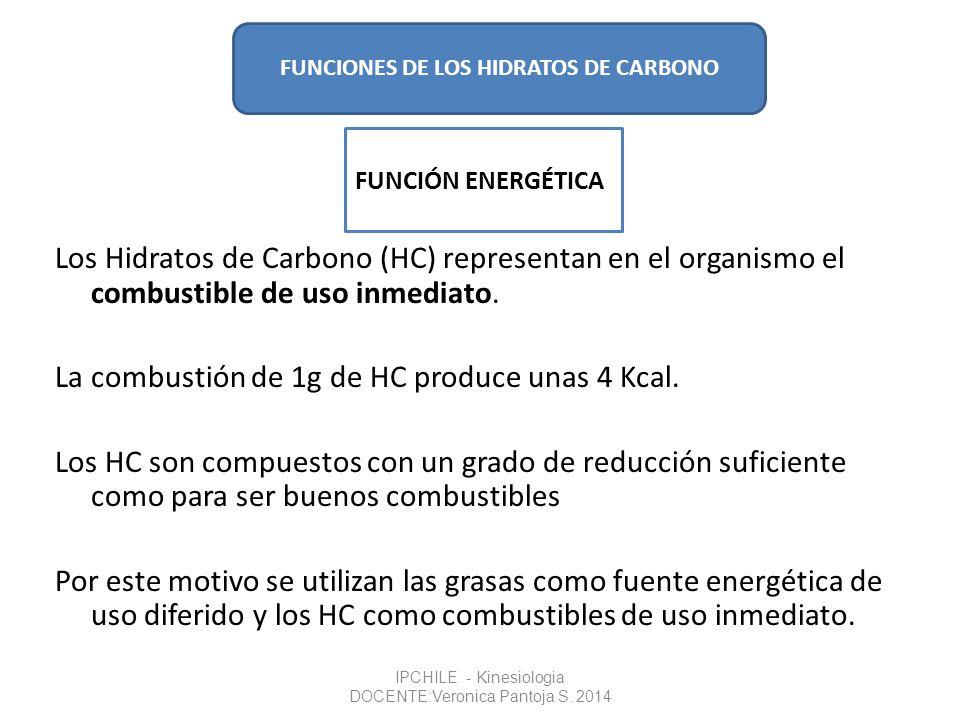 Los Hidratos de Carbono (HC) representan en el organismo el combustible de uso inmediato. La combustión de 1g de HC produce unas 4 Kcal. Los HC son co