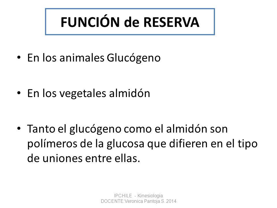 FUNCIÓN de RESERVA En los animales Glucógeno En los vegetales almidón Tanto el glucógeno como el almidón son polímeros de la glucosa que difieren en e