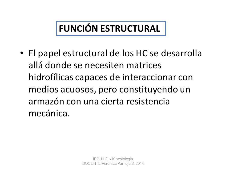 El papel estructural de los HC se desarrolla allá donde se necesiten matrices hidrofílicas capaces de interaccionar con medios acuosos, pero constituy