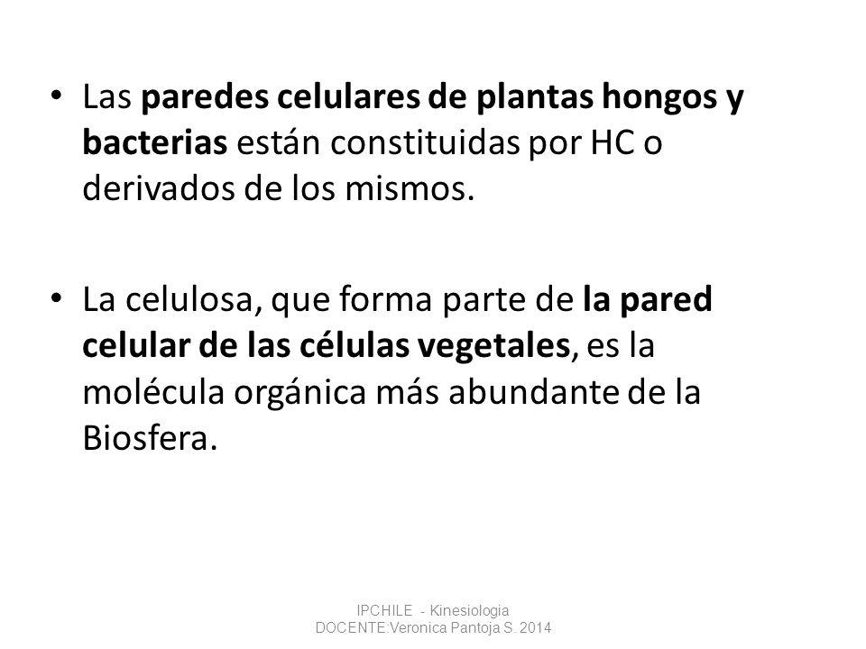 Las paredes celulares de plantas hongos y bacterias están constituidas por HC o derivados de los mismos. La celulosa, que forma parte de la pared celu