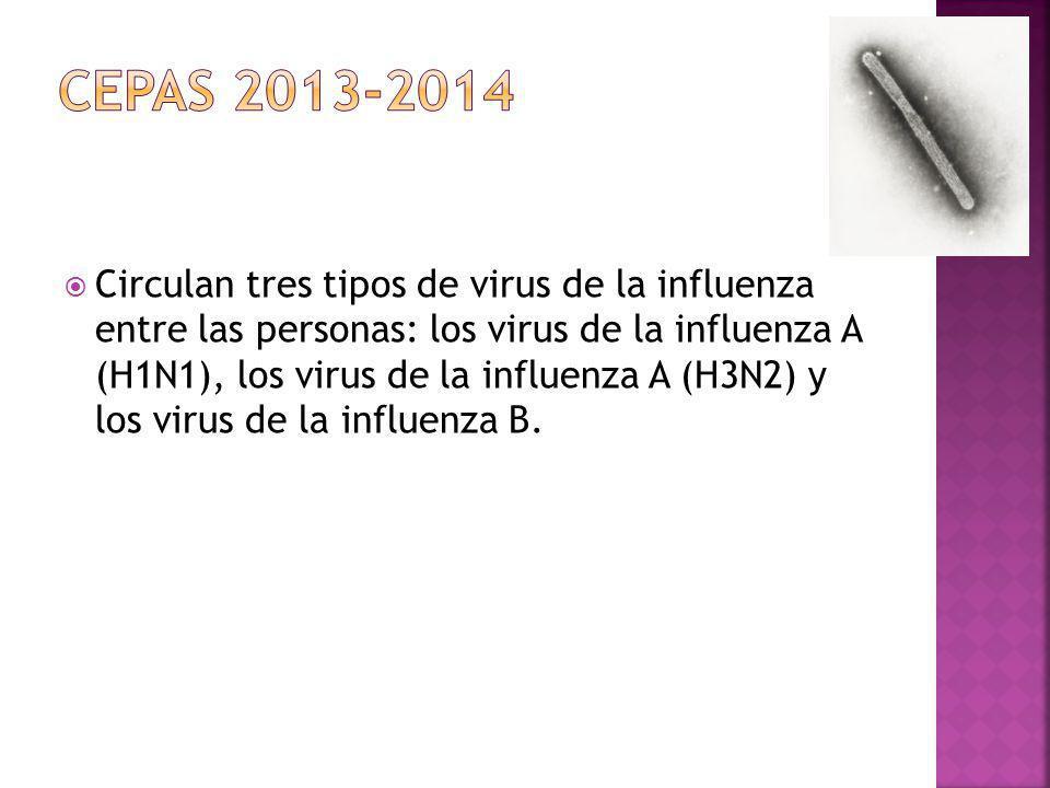 Circulan tres tipos de virus de la influenza entre las personas: los virus de la influenza A (H1N1), los virus de la influenza A (H3N2) y los virus de
