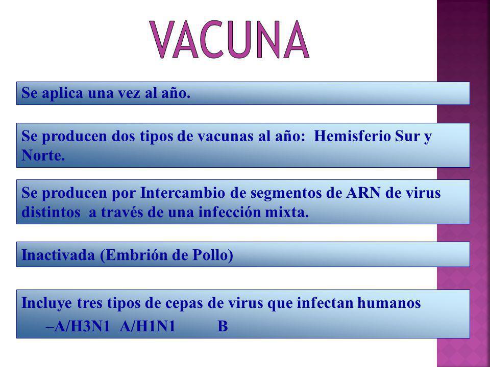 Se aplica una vez al año. Se producen dos tipos de vacunas al año: Hemisferio Sur y Norte. Se producen por Intercambio de segmentos de ARN de virus di