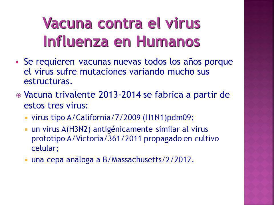 Se requieren vacunas nuevas todos los años porque el virus sufre mutaciones variando mucho sus estructuras. Vacuna trivalente 2013-2014 se fabrica a p