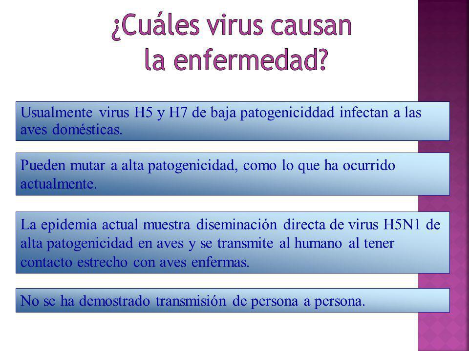 Usualmente virus H5 y H7 de baja patogeniciddad infectan a las aves domésticas. Pueden mutar a alta patogenicidad, como lo que ha ocurrido actualmente