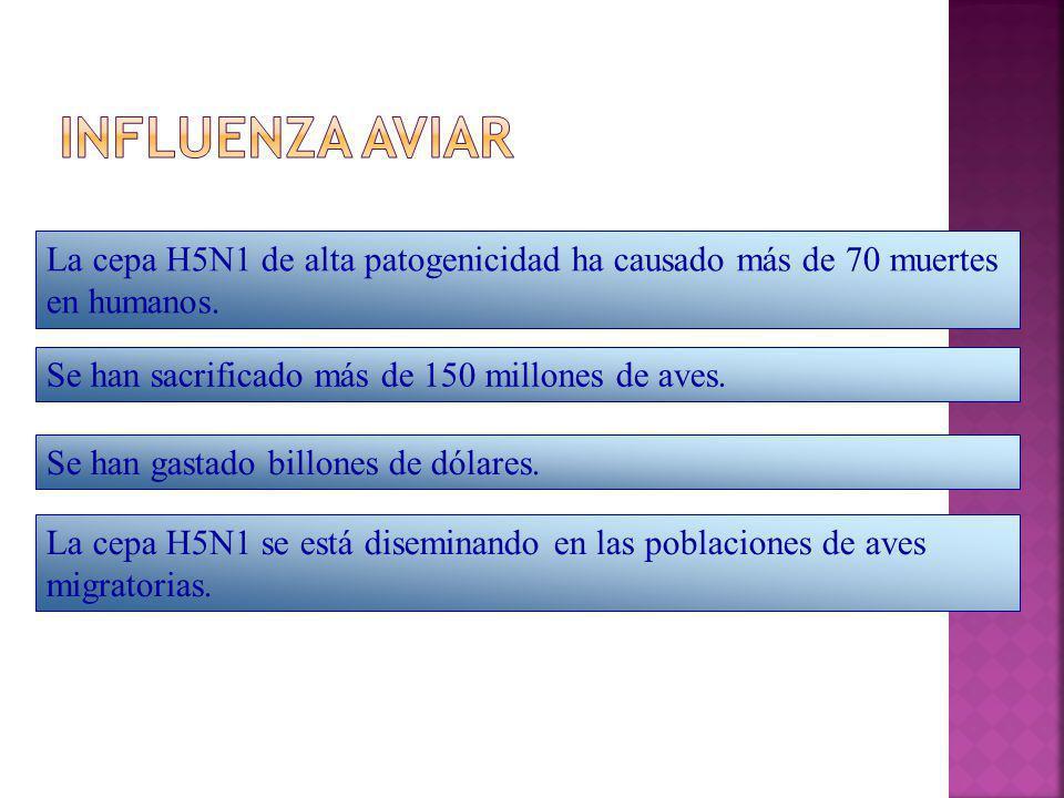 La cepa H5N1 de alta patogenicidad ha causado más de 70 muertes en humanos. Se han sacrificado más de 150 millones de aves. Se han gastado billones de