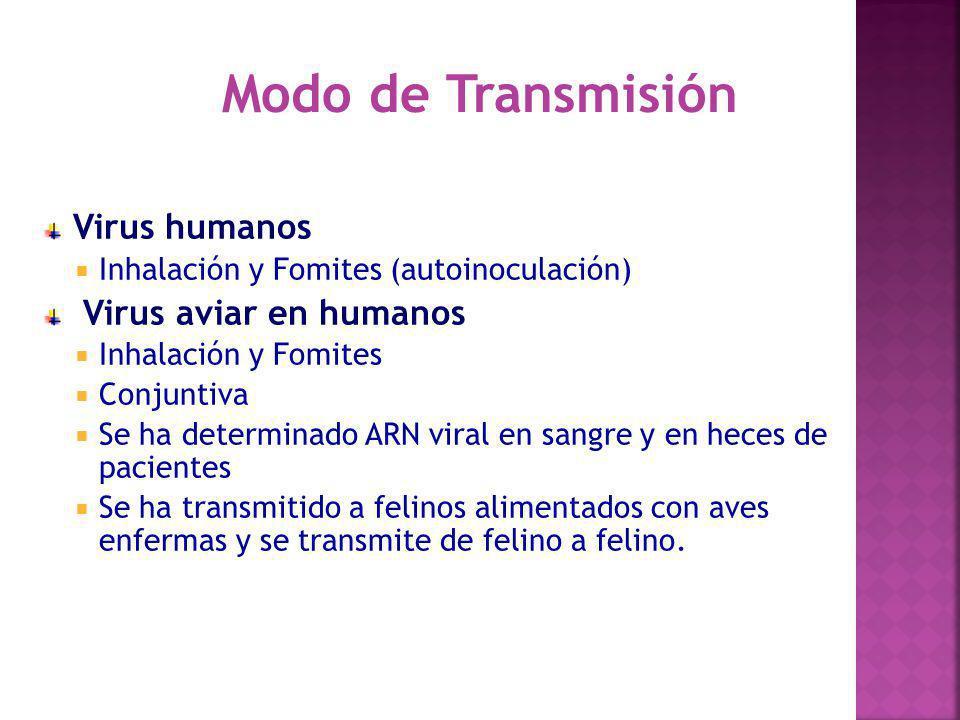 Virus humanos Inhalación y Fomites (autoinoculación) Virus aviar en humanos Inhalación y Fomites Conjuntiva Se ha determinado ARN viral en sangre y en