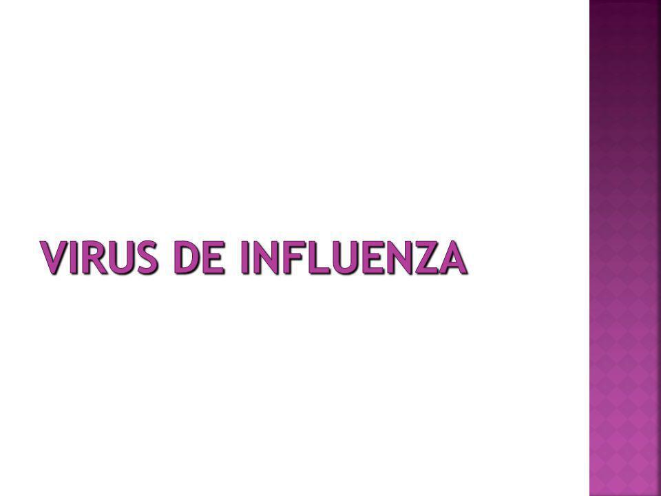 Según sus características antigénicas se dividen en tres tipos A,B,C Influenza A Influenza B solo en humanos asociados a brotes Usualmente más leve que A Influenza C solo en humanos no es importante en salud pública