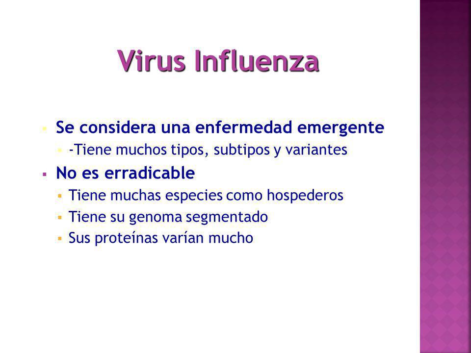 Se requieren vacunas nuevas todos los años porque el virus sufre mutaciones variando mucho sus estructuras.