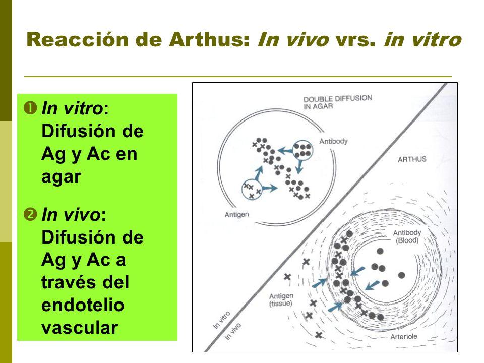 Reacción de Arthus: In vivo vrs. in vitro In vitro: Difusión de Ag y Ac en agar In vivo: Difusión de Ag y Ac a través del endotelio vascular