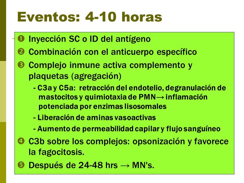 Eventos: 4-10 horas Inyección SC o ID del antígeno Combinación con el anticuerpo específico Complejo inmune activa complemento y plaquetas (agregación