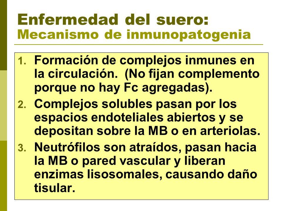 Enfermedad del suero: Mecanismo de inmunopatogenia 1. Formación de complejos inmunes en la circulación. (No fijan complemento porque no hay Fc agregad