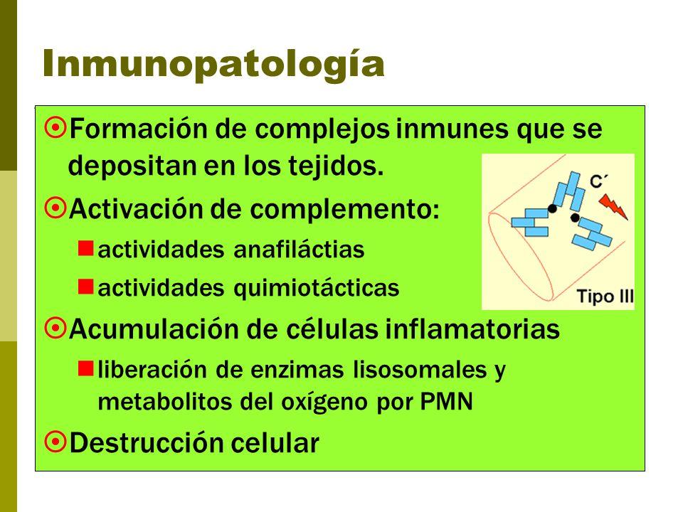 Eventos: 4-10 horas Inyección SC o ID del antígeno Combinación con el anticuerpo específico Complejo inmune activa complemento y plaquetas (agregación) - C3a y C5a: retracción del endotelio, degranulación de mastocitos y quimiotaxia de PMN inflamación potenciada por enzimas lisosomales - Liberación de aminas vasoactivas - Aumento de permeabilidad capilar y flujo sanguíneo C3b sobre los complejos: opsonización y favorece la fagocitosis.
