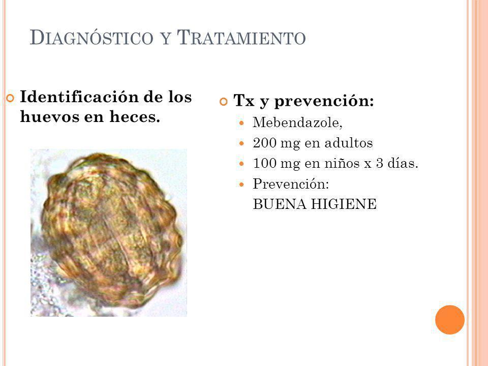 D IAGNÓSTICO Y T RATAMIENTO Identificación de los huevos en heces. Tx y prevención: Mebendazole, 200 mg en adultos 100 mg en niños x 3 días. Prevenció