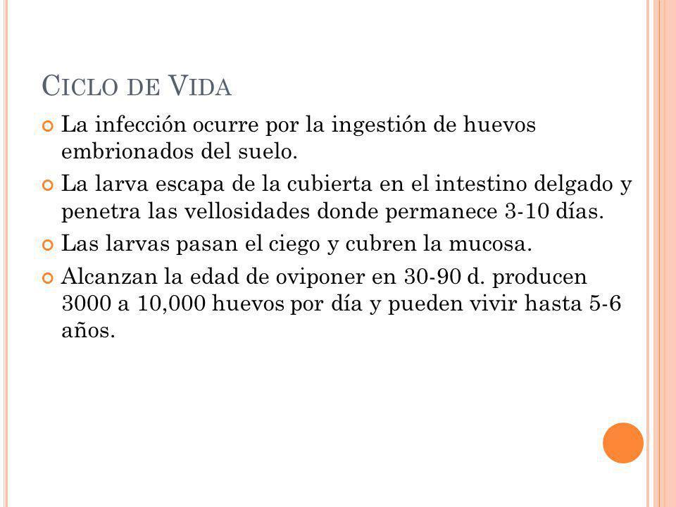 C ICLO DE V IDA La infección ocurre por la ingestión de huevos embrionados del suelo. La larva escapa de la cubierta en el intestino delgado y penetra
