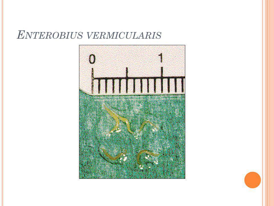 E NTEROBIUS VERMICULARIS