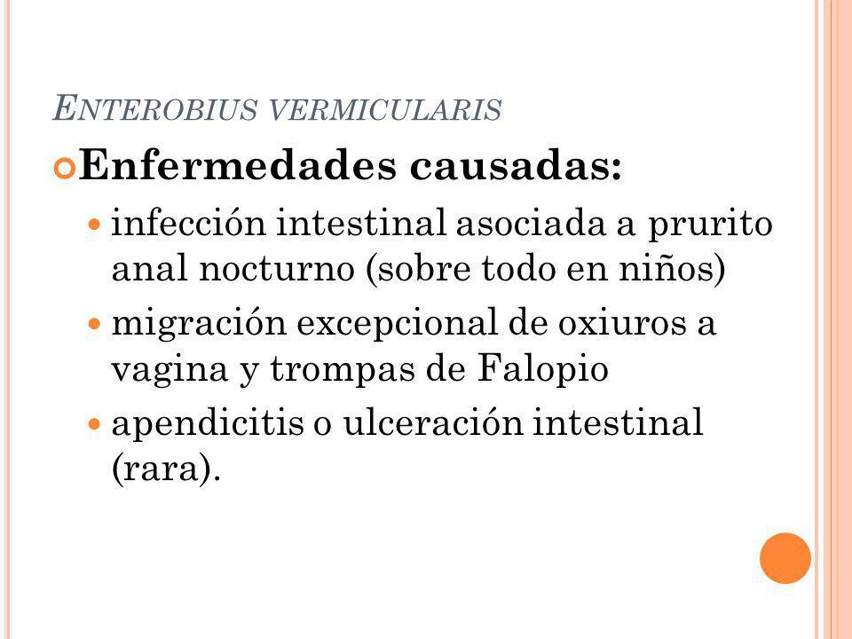 Enfermedades causadas: infección intestinal asociada a prurito anal nocturno (sobre todo en niños) migración excepcional de oxiuros a vagina y trompas