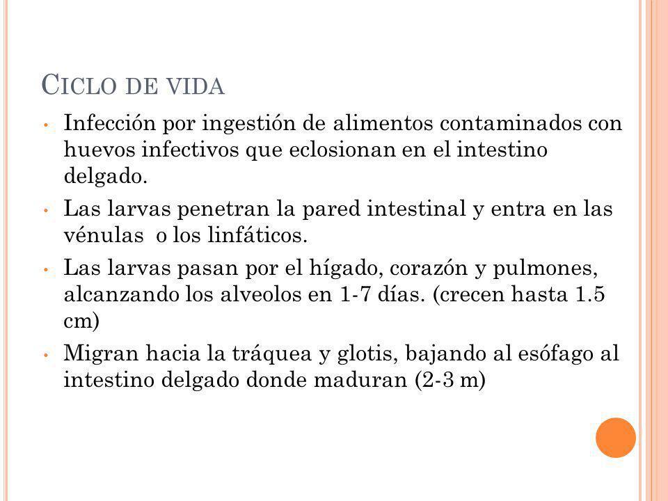 C ICLO DE V IDA La infección ocurre por la ingestión de huevos embrionados del suelo.
