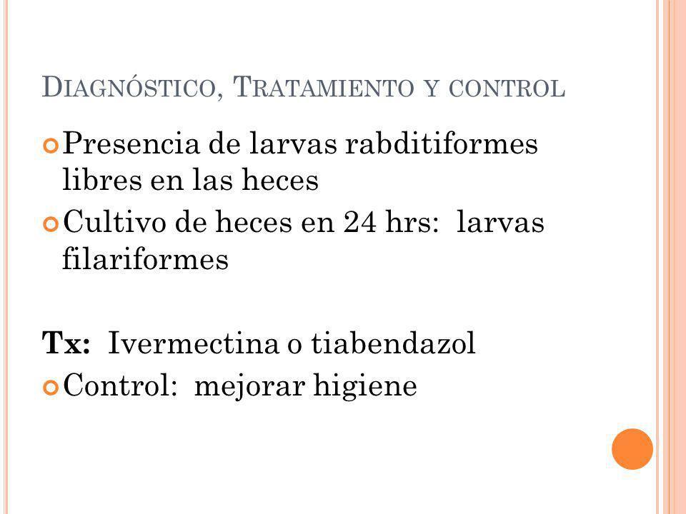 D IAGNÓSTICO, T RATAMIENTO Y CONTROL Presencia de larvas rabditiformes libres en las heces Cultivo de heces en 24 hrs: larvas filariformes Tx: Ivermec